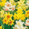 Spring bulbs sale