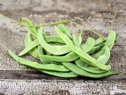 Missouri Wonder Pole Bean Seeds. Yields Several Pounds Per Plant. - Caribbeangardenseed