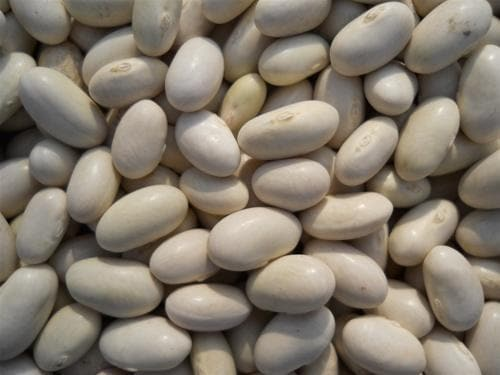 Roma II Bush Bean Seeds. Wide flat Romano type. Smooth texture - Caribbeangardenseed