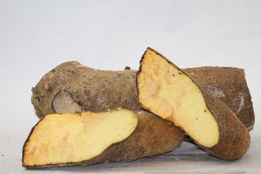 Jamaican Yellow Yam Tuber, Guinea yam, TROPICAL ROOT VEGETABLE - Caribbeangardenseed