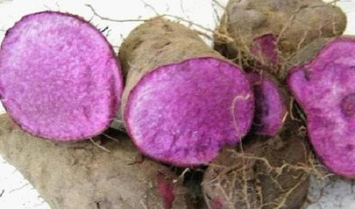 Filipino Purple yam,Jamaican Moonshine Yam Tuber,Indian Ratalu - Caribbeangardenseed