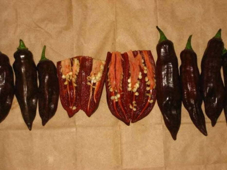 Chocolate Fatalii Pepper Seed ( Capsicum chinense) Very hot Heirloom - Caribbeangardenseed