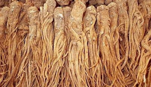 Female Ginseng Seeds - Dong Quai, Chinese Medicine Herb, Angelica Sinensis - Caribbeangardenseed
