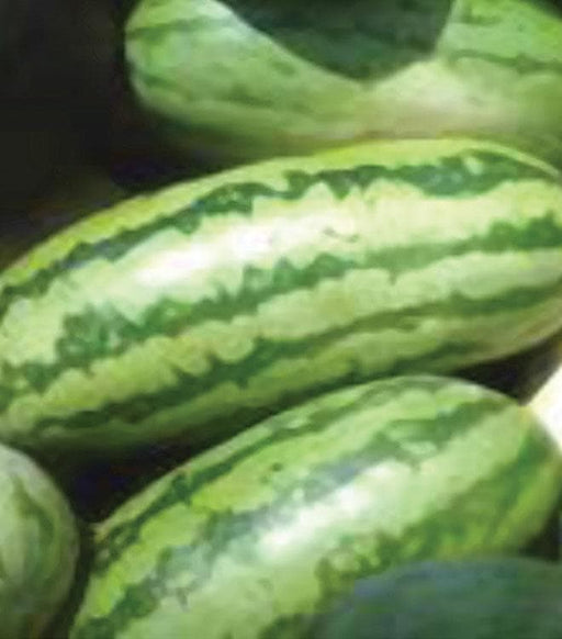 Jubilee OP Watermelon Seeds, a sweet, crisp flesh, old favorite - Caribbeangardenseed