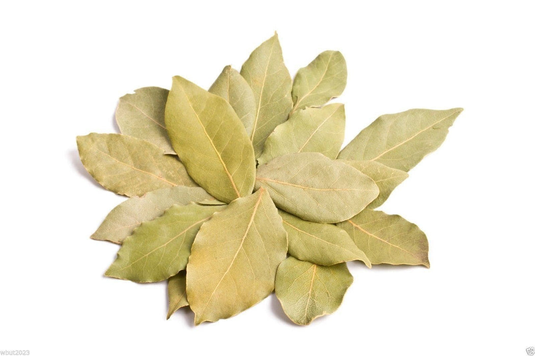 Bay Leaf Plant Seed a.K.a Sweet Bay, Bay Laurel,True Laurell, Laurus nobilis - Caribbeangardenseed