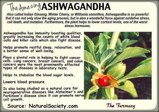 Indian Ginseng - Caribbeangardenseed