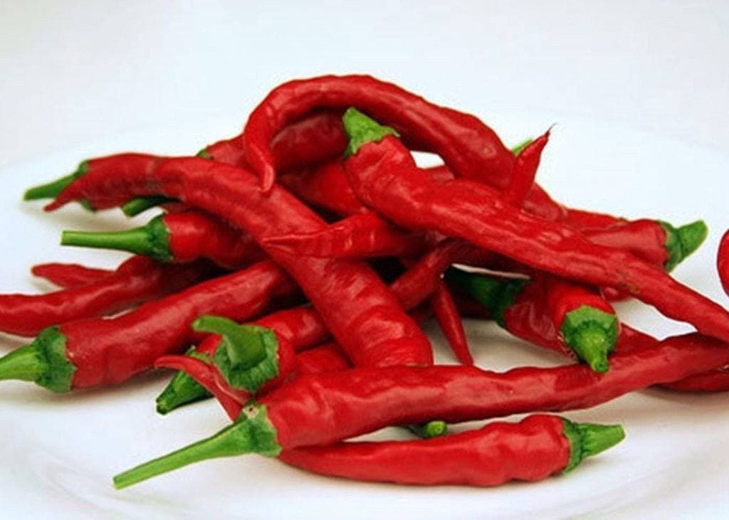 Byadgi Chilli Pepper Seeds , AKa Kaddi Chillies,Capsicum Annuum , Great  fresh, dried or in powder form ! - Caribbeangardenseed