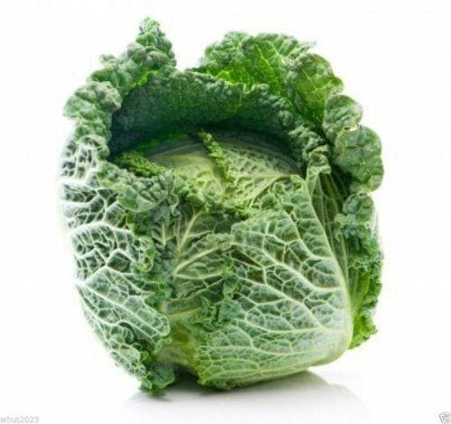 Savoy Cabbage seeds- Biennial Vegetable - Caribbeangardenseed
