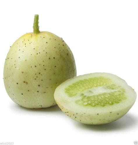 Crystal Apple CUCUMBER SEEDS-OPEN-POLLINATED-Organic Non-GMO -Cucumis sativus - Caribbeangardenseed