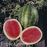 Triple Crown Hybrid Watermelon seed (Seedless) One the best-tasting red variety - Caribbeangardenseed