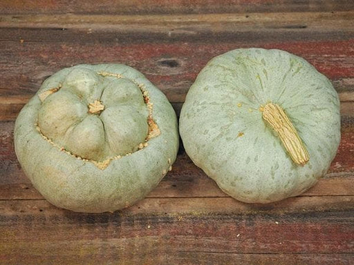 UTE Indian Squash Seeds, Greenish-grey shell with bright yellow flesh. - Caribbeangardenseed