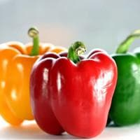 Sweet Bell Pepper - Mix,Red,yellow,Orange, Capsicum annuum, Annual - Caribbeangardenseed
