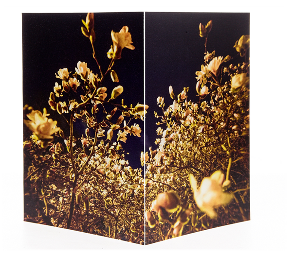 "POS ""Evening Blossoms II"" (Greeting Card Set 12 pack)"