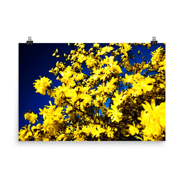 "NEW ""Moonlit Blossoms"" Fine Art Print"