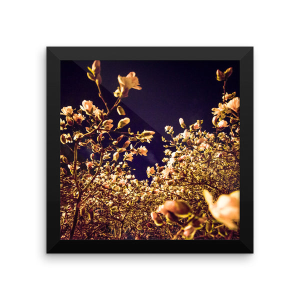 "NEW ""Evening Blossoms II"" Fine Art Framed Print"