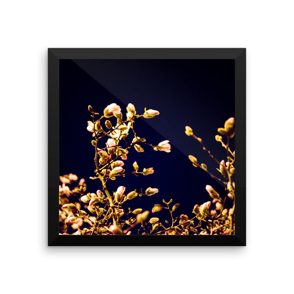 "NEW ""Evening Blossoms I"" Fine Art Framed Print"