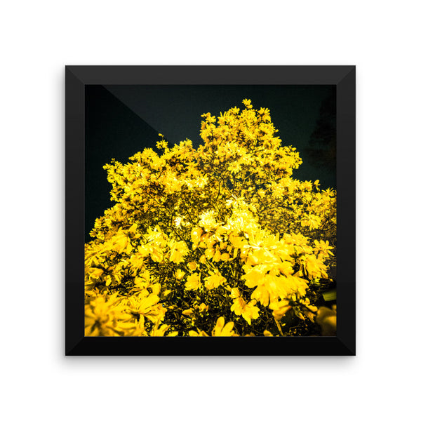 "NEW ""Evening Gold"" Fine Art Framed Print"