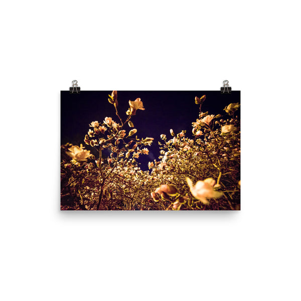 "NEW ""Evening Blossoms II"" Fine Art Print"