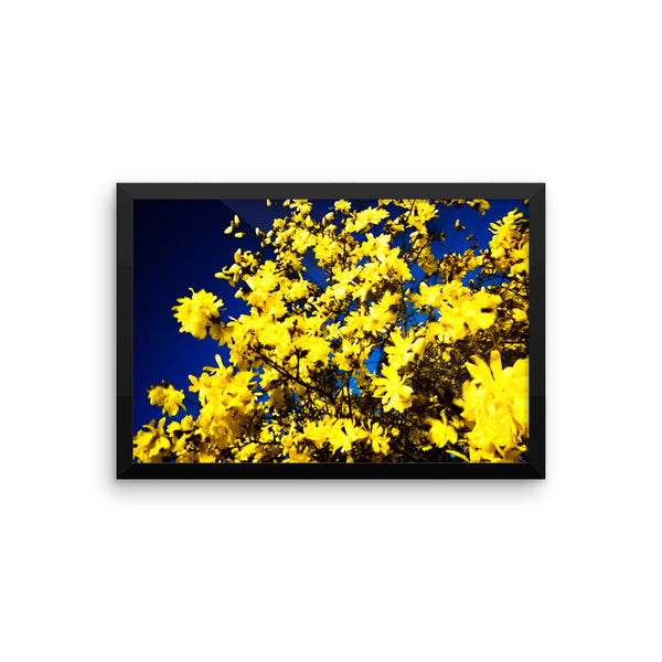 "NEW ""Moonlit Blossoms"" Fine Art Framed Print"