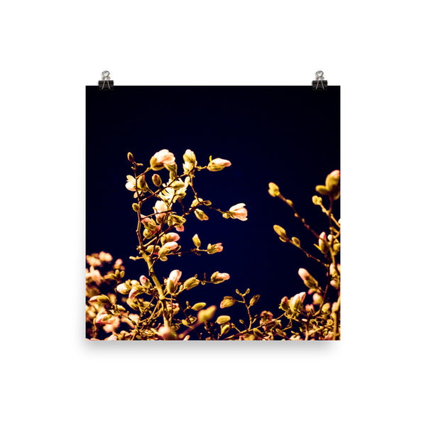 "NEW ""Evening Blossoms I"" Fine Art Print"