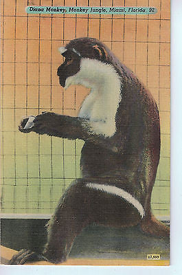 Vintage Postcard of Diana Monkey in Monkey Jungle, Miami, Florida $10.00
