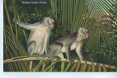 Vintage Postcard of Monkey Jungle, Florida $10.00