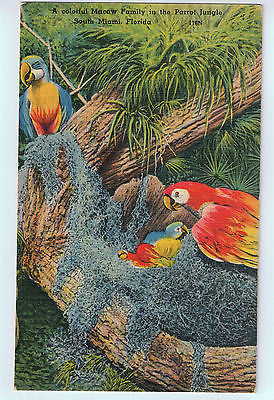 Parrot Jungle, Miami Florida Postcard UNUSED $4.00