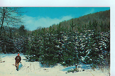 Vintage Postcard of Hunting Lodges, Pennsylvania A $10.00