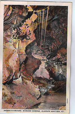 Vintage Postcard of Nabob's Vineyard, Diamond Caverns, Glasgow Junction, KY $10.00