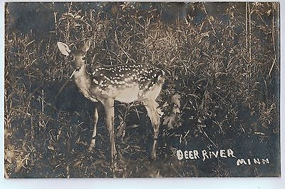 Vintage Postcard of A Deer in, Deer River, MN $10.00