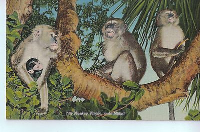 Vintage Postcard of The Monkey Jungle, near Miami, FL $10.00