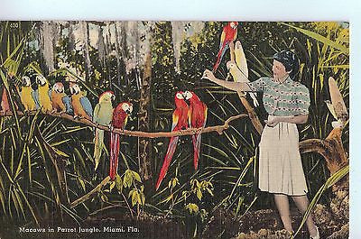 Vintage Postcard of Maccaws in Parrot Jungle, Miami, Flordia $3.00