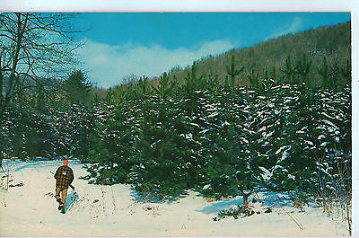 Vintage Postcard of a Hunter in Pennsylvania A $10.00