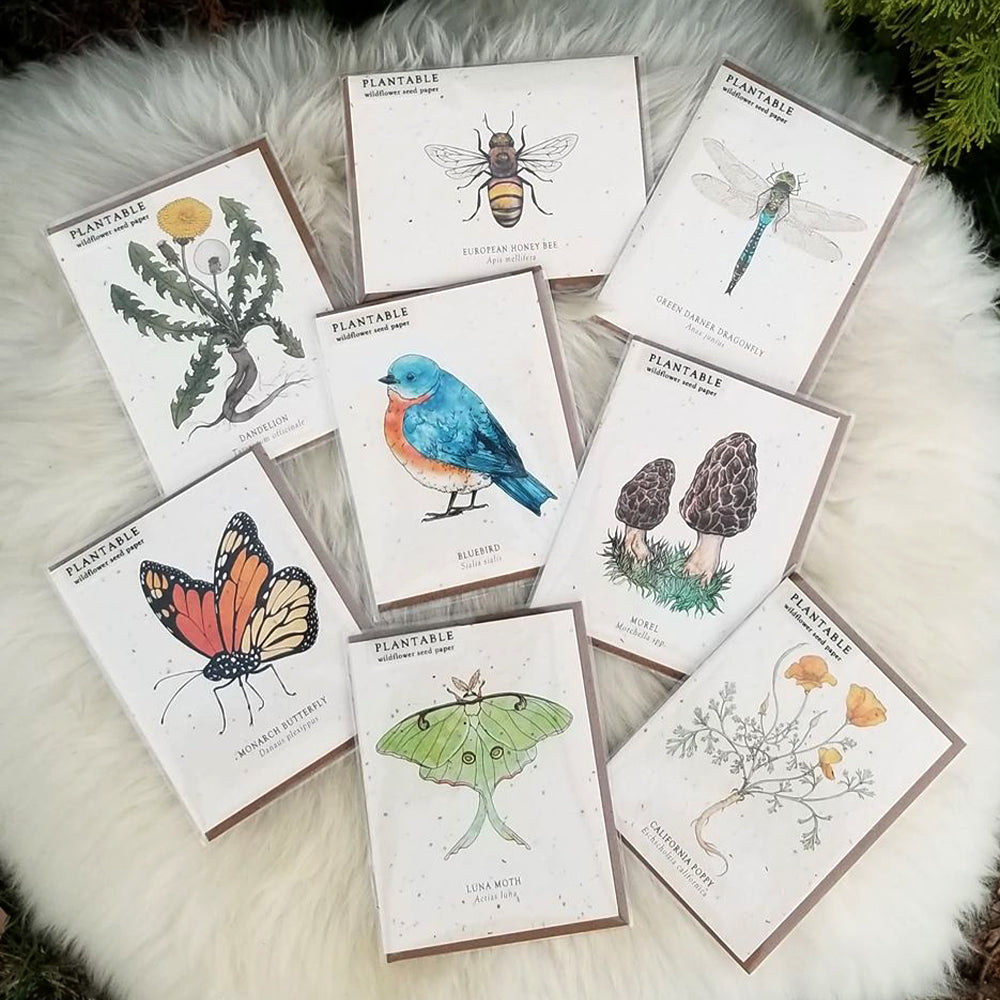 One of Each Please Plantable Wildflower Greeting Cards!