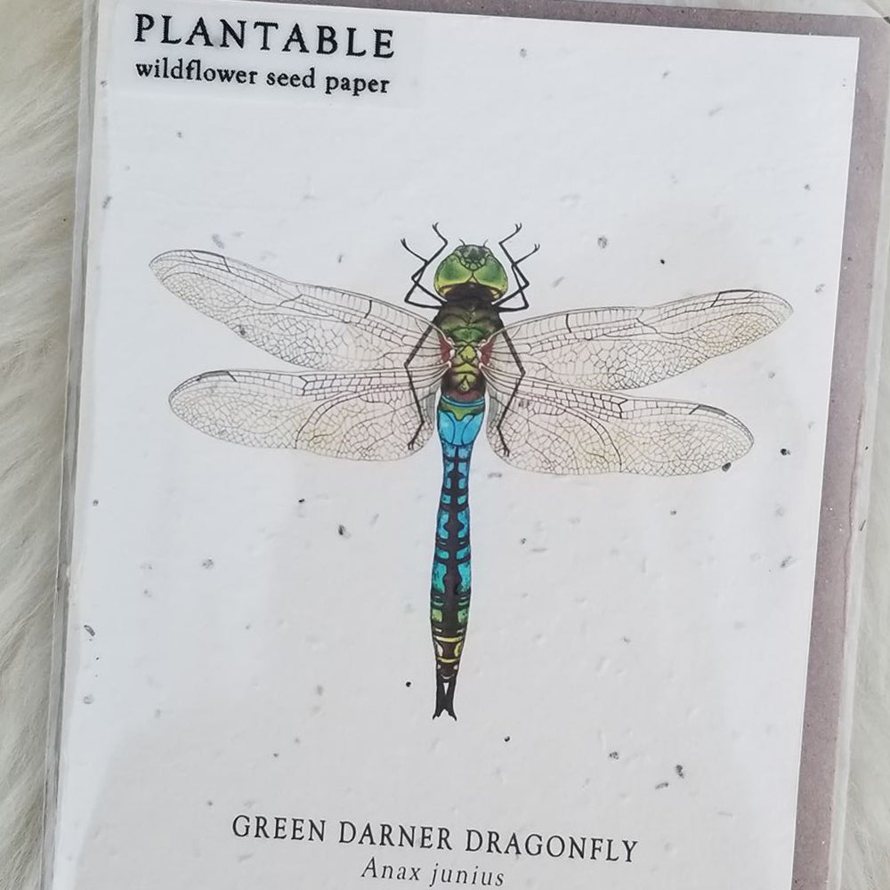 Dragonfly Plantable Wildflower Greeting Card