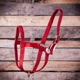 Premium 2 Ply Nylon Yearling Cow Halter - SK Tack & Supply - 4