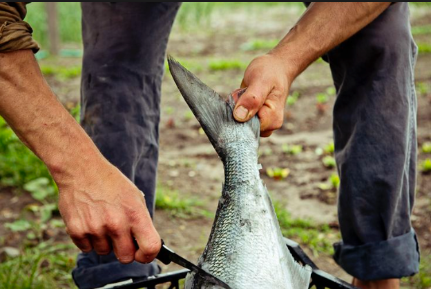 3 Survival Fishing Tips You Should Know