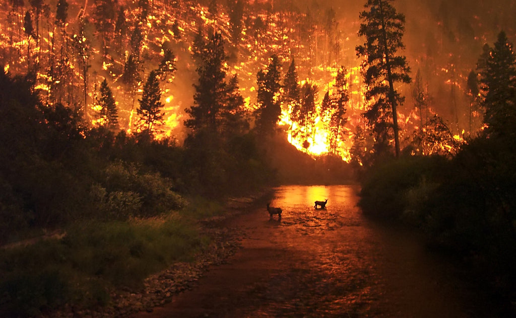 Your Way to Wildfire Safety Success