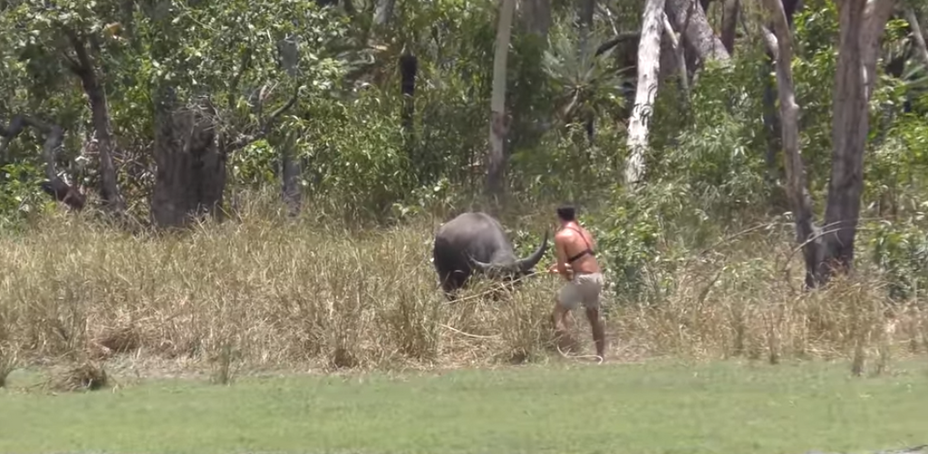 How To Catch a Water Buffalo With Rope