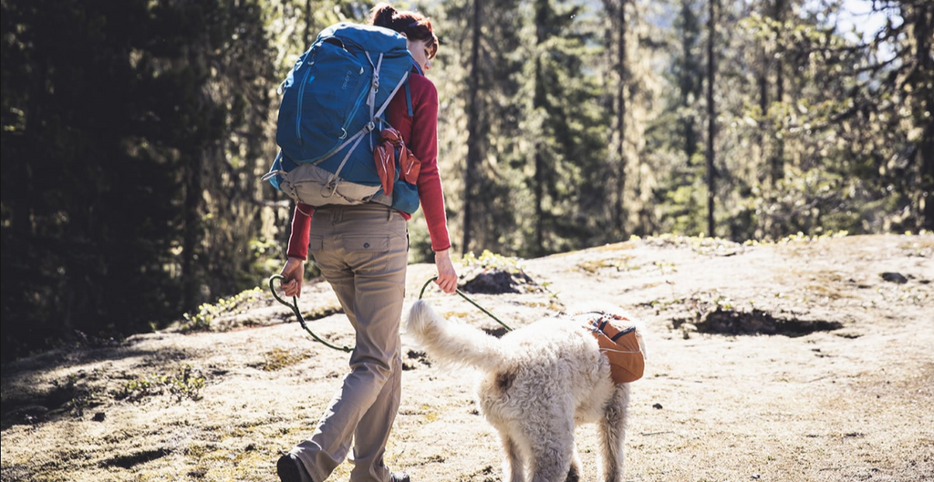4 First Aid Tips for Hiking with Your Dog