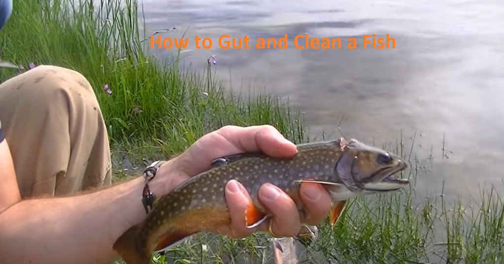 How To Gut and Clean a Fish In 4 Steps