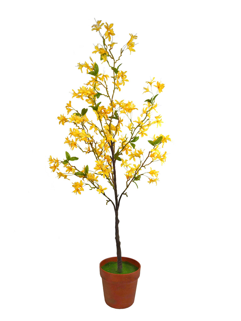 Yellow Forsythia Tree in Pot