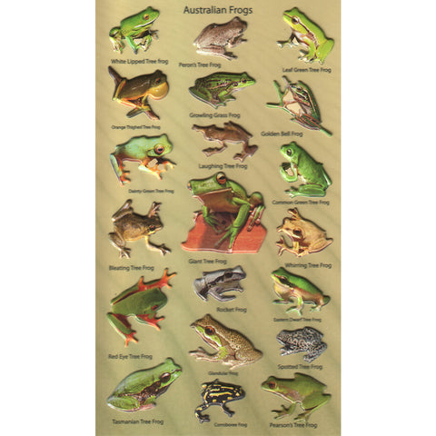 3DF-A-FROGS-R - Tim The Toyman Australian Frogs 3D Foam Stickers