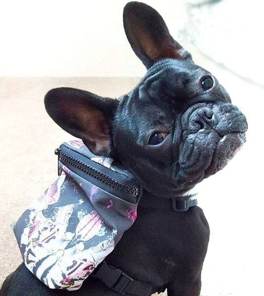 GRAFFITI DOG HARNESS BACKPACK