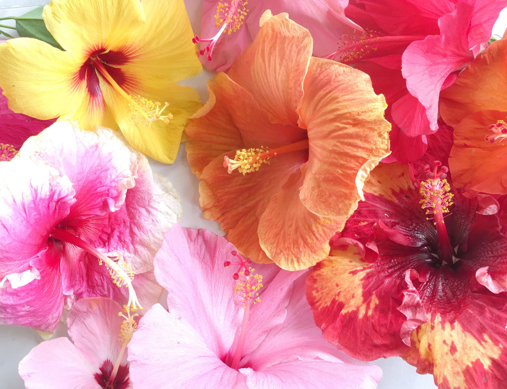 Happy spring national flower day leahlani skincare in hawaii its feeling more like summer with the beautiful weather right now and the light trade winds finally picking back up izmirmasajfo Choice Image