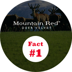 Fact #1 Mountain Red deer velvet