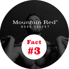 Mountain Red deer velvet fact 3