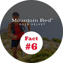 Mountain Red Deer Velvet Fact number 6