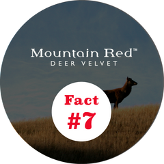 Mountain Red deer velvet facts