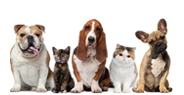 Diabetic Pet Care